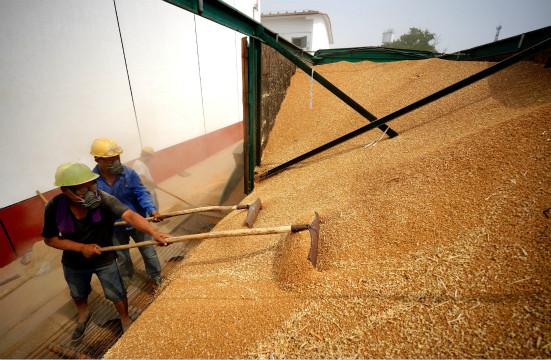 中国粮食有危机?这些误读坑人不浅