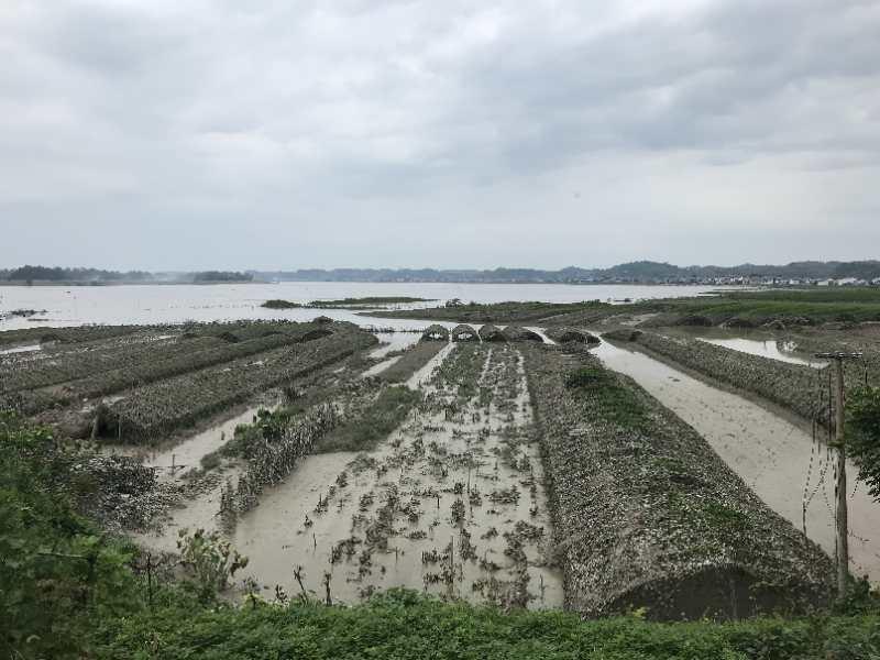 """""""嘉陵江2020年第2号洪水""""已形成!"""