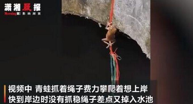 井底蛙顺着绳子往上爬,不少人被感动,网友:想我那只去旅行的青蛙了