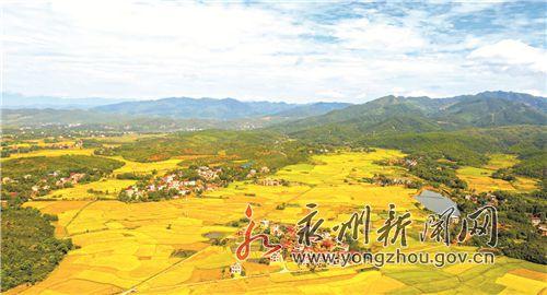 东安县24.6万亩中稻丰收在望(图)