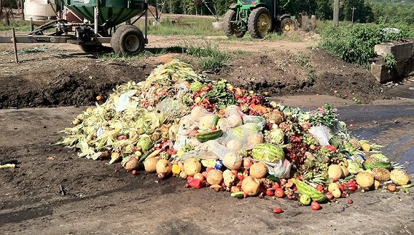 全球每年13亿吨食物被丢弃,各国是如何制止浪费的?