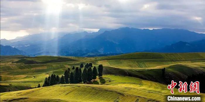 图为新疆奇台江布拉克麦田。受访者供图