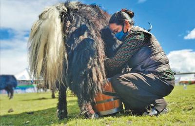 西藏那曲高寒牧区的温暖日子 建立农牧互助协会促进扶贫(图)
