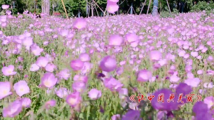 唱响美丽中国 丨安徽省阜阳市环保人演唱六五环境日主题歌《让中国更美丽》