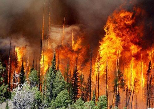 阿尔巴尼亚多地火灾 烧毁林木植被超340公顷