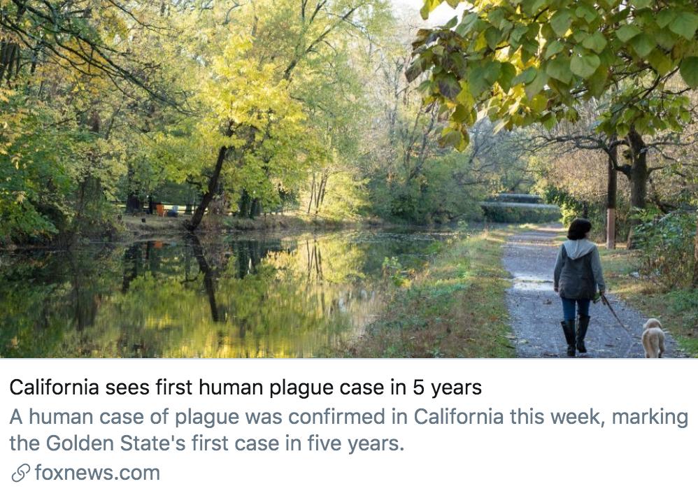 加州5年后再现1例人感染鼠疫病例。/ 福克斯新闻网报道截图