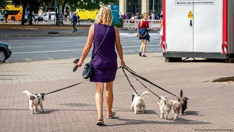 法案还关注了狗的其他需要(AFP)