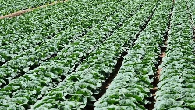 我市农产品合格率98%以上