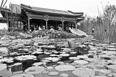 """北京14区明年全部建成""""森林城市"""""""