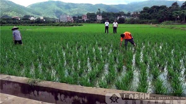 普北:脱贫攻坚战 旱地变为水田