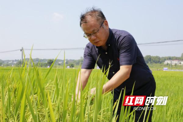 视频丨湖广熟,天下足,三湘鱼米粮油真香