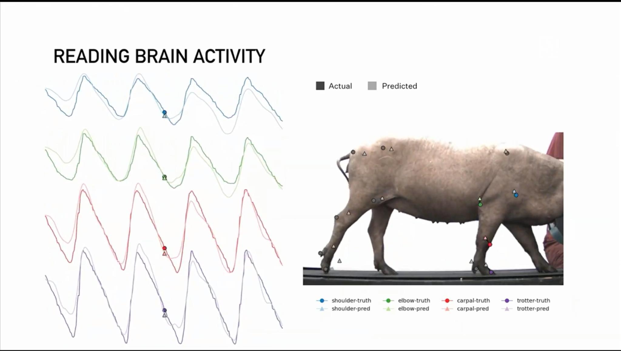《【超越平台注册网址】马斯克直播展示脑机接口:植入猪脑,硬币大小,无线传输》