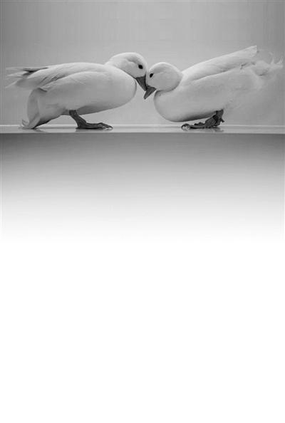 它身为鸟类 为啥能在宠物界吊打众多哺乳动物