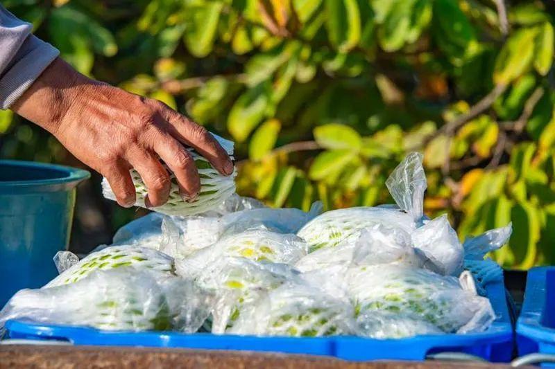 12万张追溯码3万余批次检测番禺区这样守护农产品质量