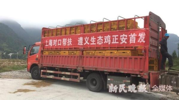 """吉他、林下鸡、野木瓜汁!在贵州正安,这都是""""扶贫大事业"""""""
