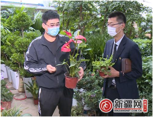 新疆奎屯:花卉市场恢复营业 花卉相互竞争