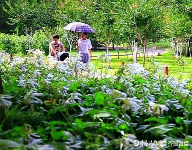 济南:初秋植物园清爽宜人 游人郊游乐