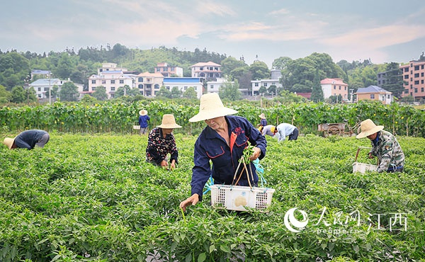 """江西萍乡安源区:农村公路提档升级""""村村痛""""变""""村村通"""""""