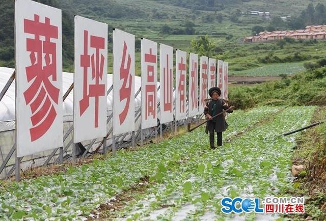 百贤县几千个村庄的有机蔬菜基地 每个月