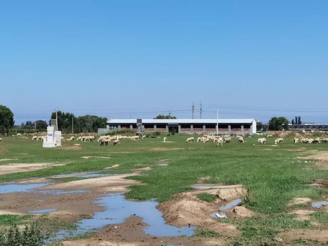 """陵园内种地放羊,呼和浩特一重点文物保护单位成了""""农牧场"""""""