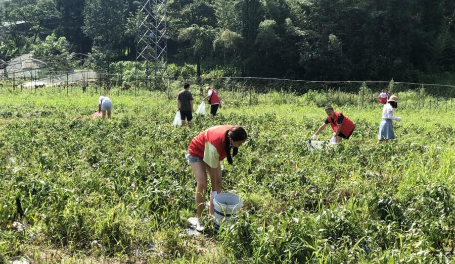 抢收、抢购、义卖!鹤峰志愿者助农灾后重建