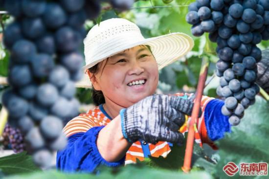 泉州德化:生态优势帮助果农增收致富