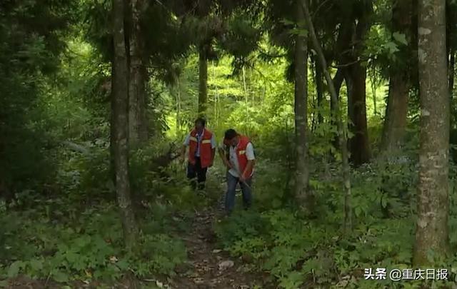"""重庆发布""""森林草原火险橙色预警信号""""护林员加强防火巡查"""