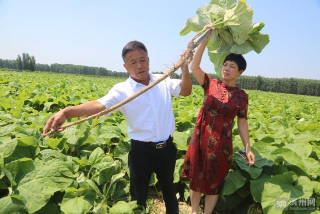 """邹平市台子镇发展特色农业,鼓起农民""""钱袋子"""""""