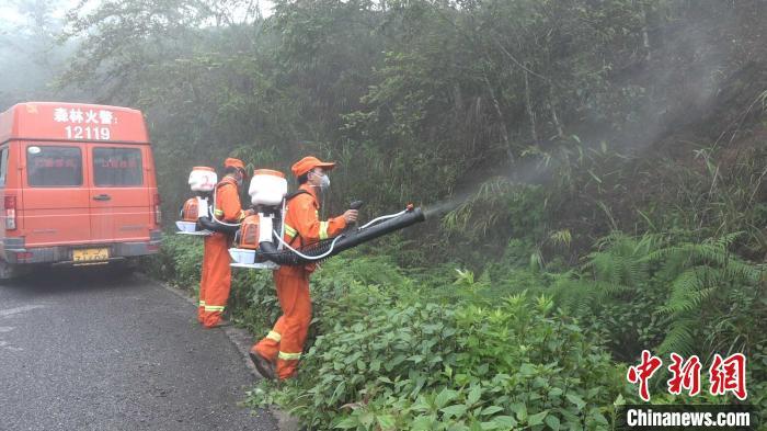 亿兴测速官网:云南黄亿兴测速官网脊竹蝗发生图片