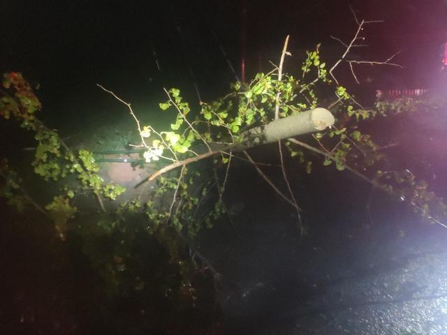 """""""黑格比""""台风登陆夜 温岭消防紧急排除路上险情"""