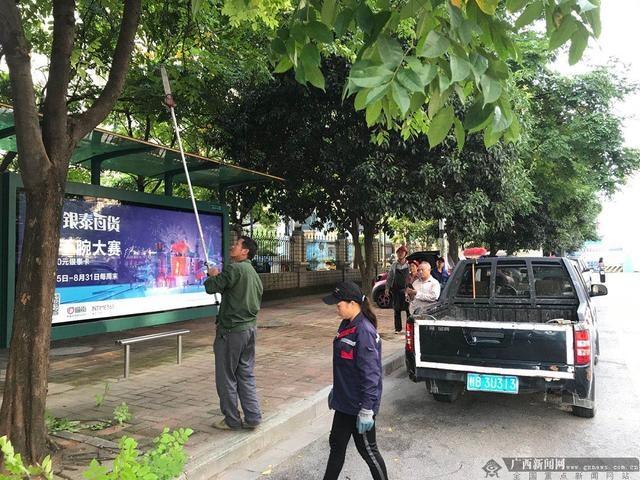 柳州市鱼峰区绿化所:修剪行道树,提升景观效果