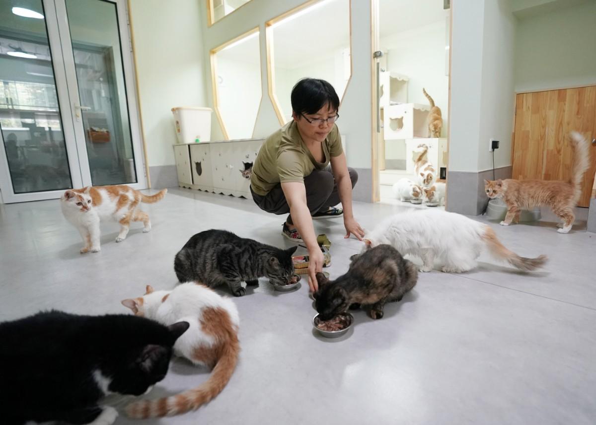 """北京有群爱猫人,想给每只流浪猫找个""""铲屎官"""""""