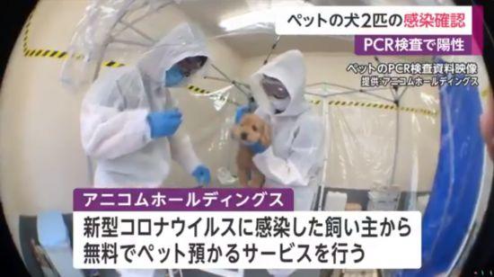 日本首次报告宠物犬确诊 政府:尚无证据狗会成为传染源