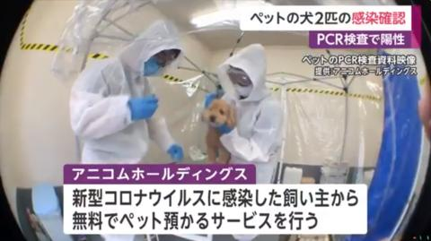 日本首次报告宠物犬确诊 政府:尚无证据狗会成传染源