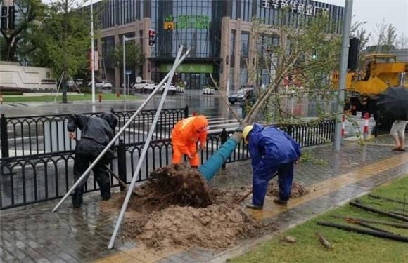 """树木倒伏连夜处置 排水口被堵手动清理 上海快速消化台风""""后遗症"""""""
