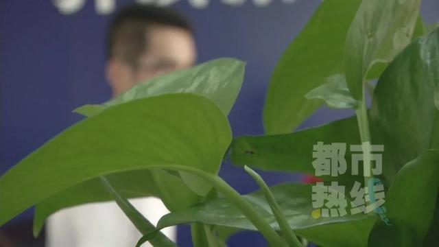 """西安一男厨师网恋被骗4万多,""""成熟""""女友竟是未成年人!"""