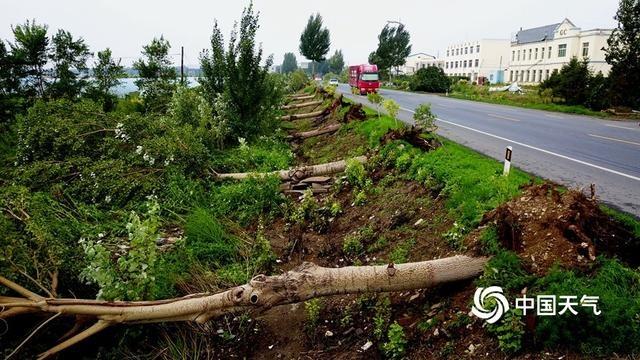 辽宁铁岭遭遇强对流 瞬时最大风力超8级上千棵大树被吹倒