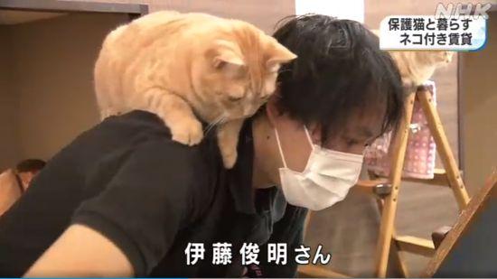 """日本""""猫咪公寓""""招租:入住就送猫 还帮你一起养"""