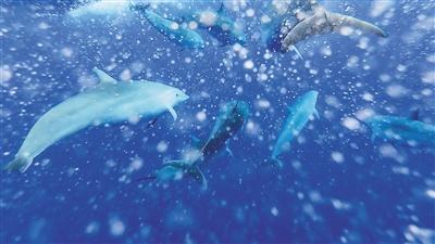 """南海""""鲸""""喜:中科院深海所科研"""