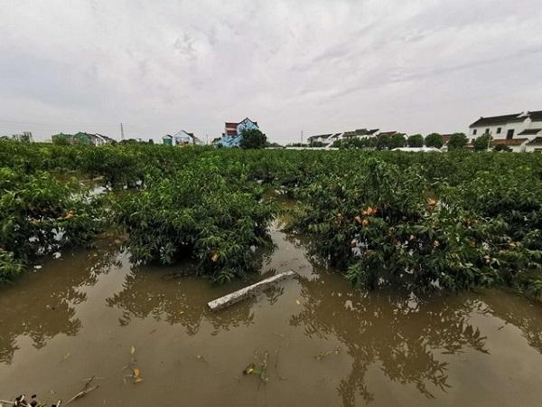 图说:金山区多处农田果园被淹 金山警方供图(下同)
