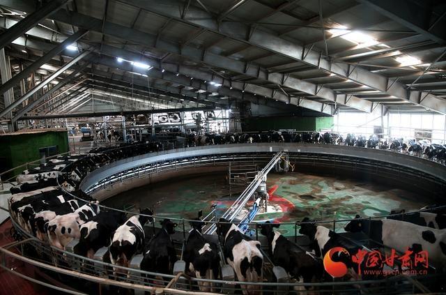 甘州:产业龙头带领乡亲奔富路