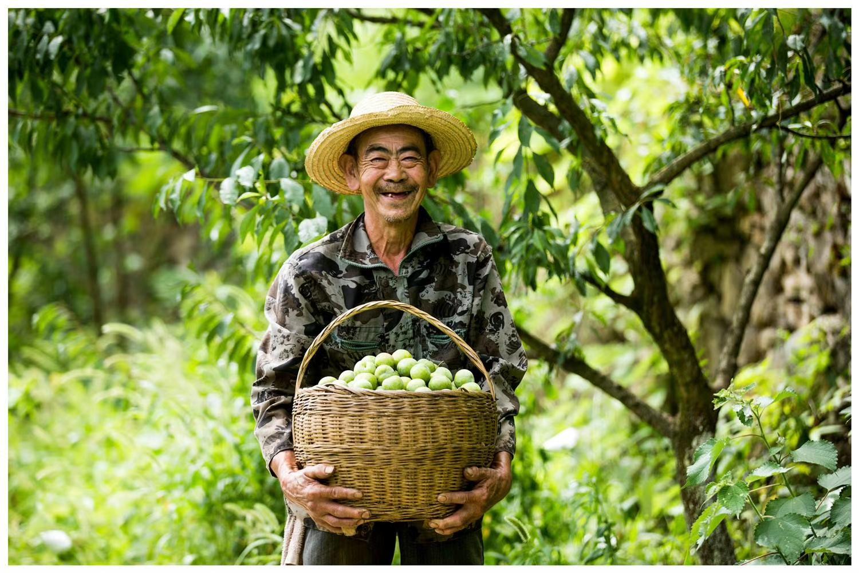"""接力""""小满助力计划"""" 度小满启动企业采购帮扶受灾农户"""