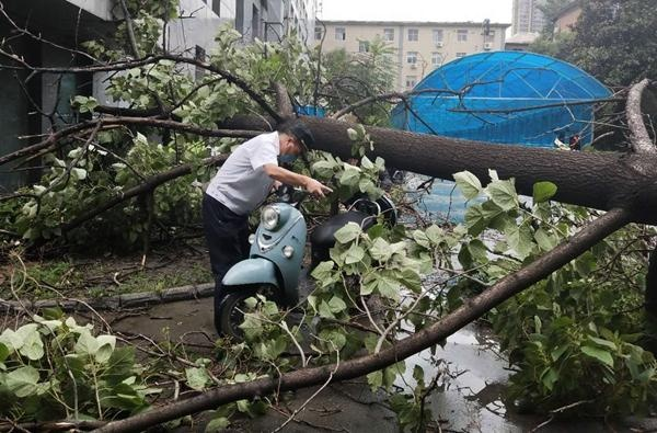 大雨过后小区老树接连断裂倒下 树下奔驰、宝马、奥迪车纷纷被砸