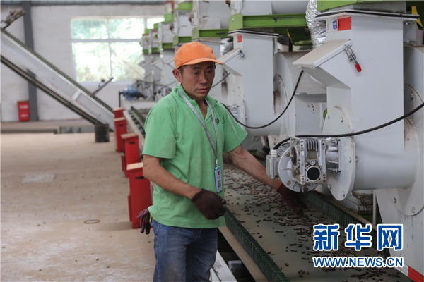 道真县隆兴镇:围绕烤烟产业稳就业保民生
