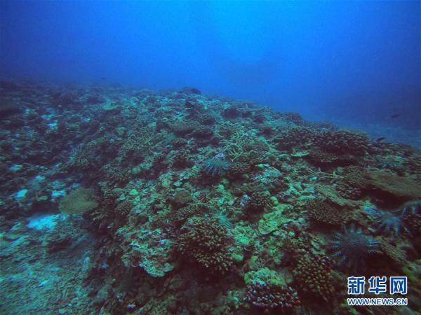 科考证实近三年南海岛礁长棘海星灾害愈发严重【图】