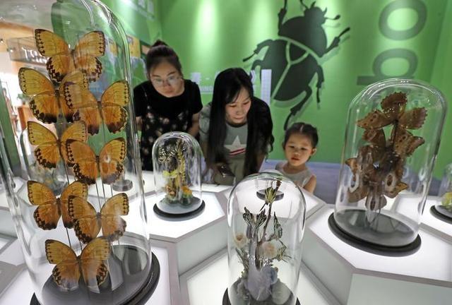 杭州虫生主题展 走进昆虫美丽奇境