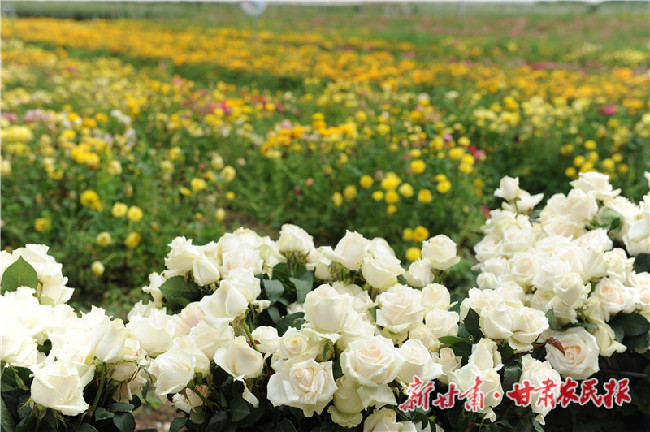 """扶贫花开,""""渭""""梦而来!渭源县政府与阿里巴巴签约云助农"""