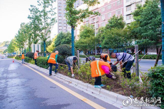 娄底市风景园林管理处:不惧高温,用心守护绿色