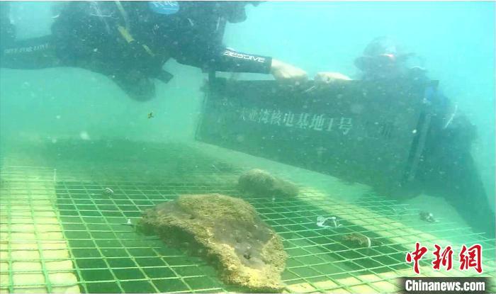 广东大亚湾核电基地建珊瑚保育区 40位保育官见证珊瑚生长