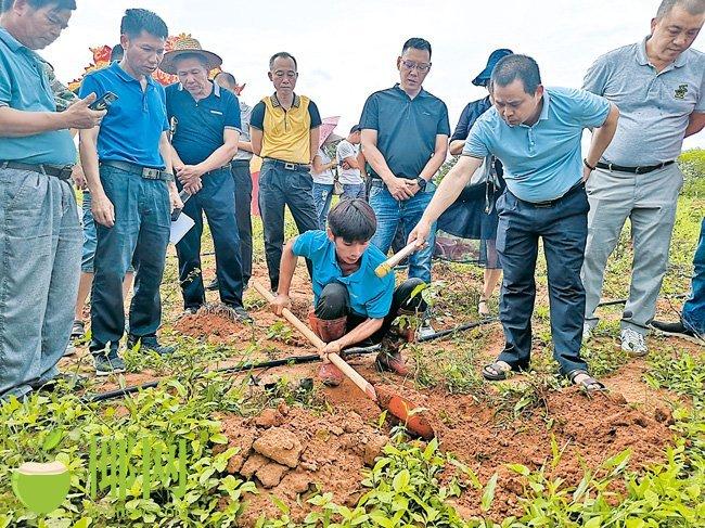 推动乡村振兴 儋州市大成镇召开黄皮苗种植现场会